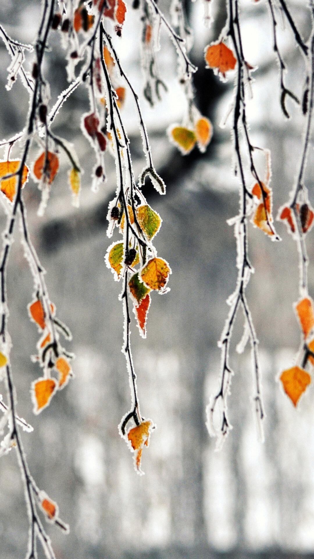 объект осень зима картинки на телефон это натуральный камень