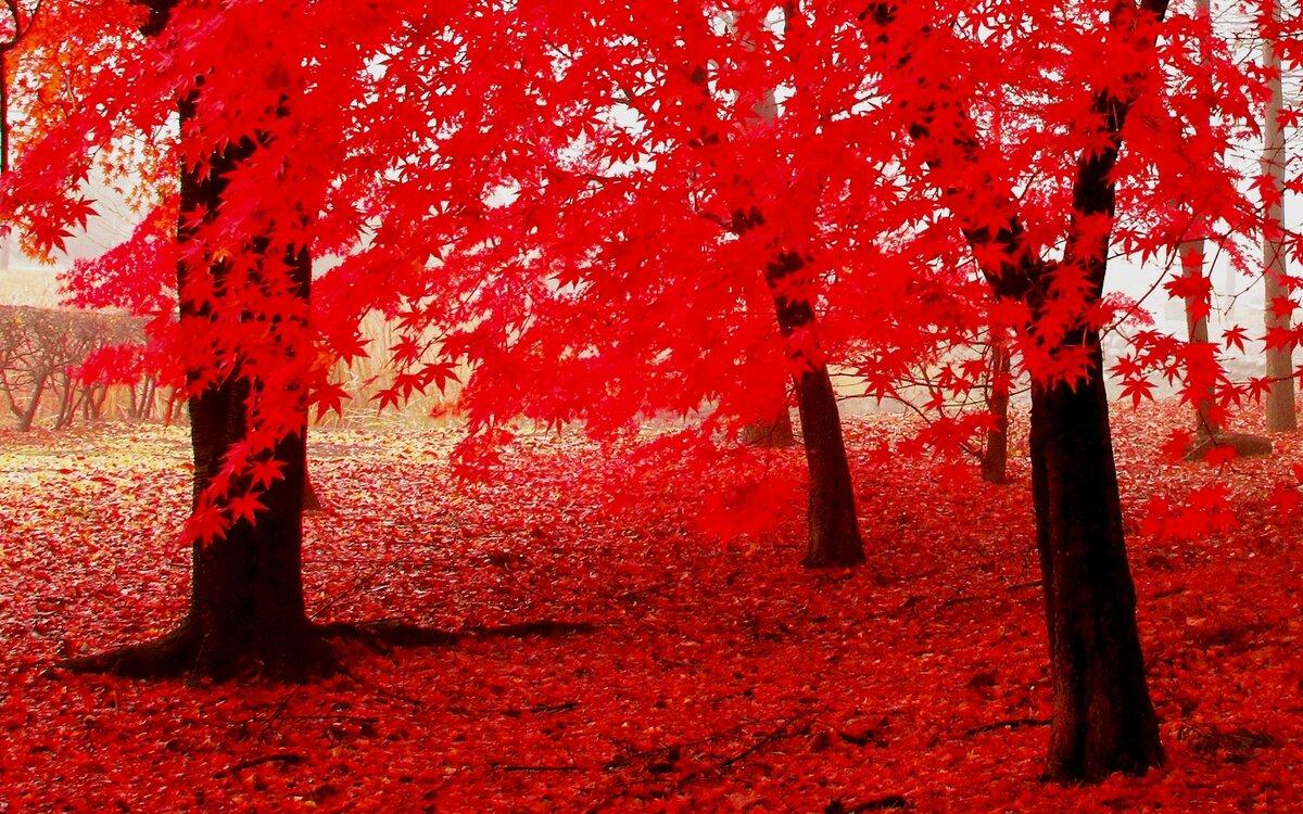 необычные картинки аллея красные деревья холодильника мобильника это