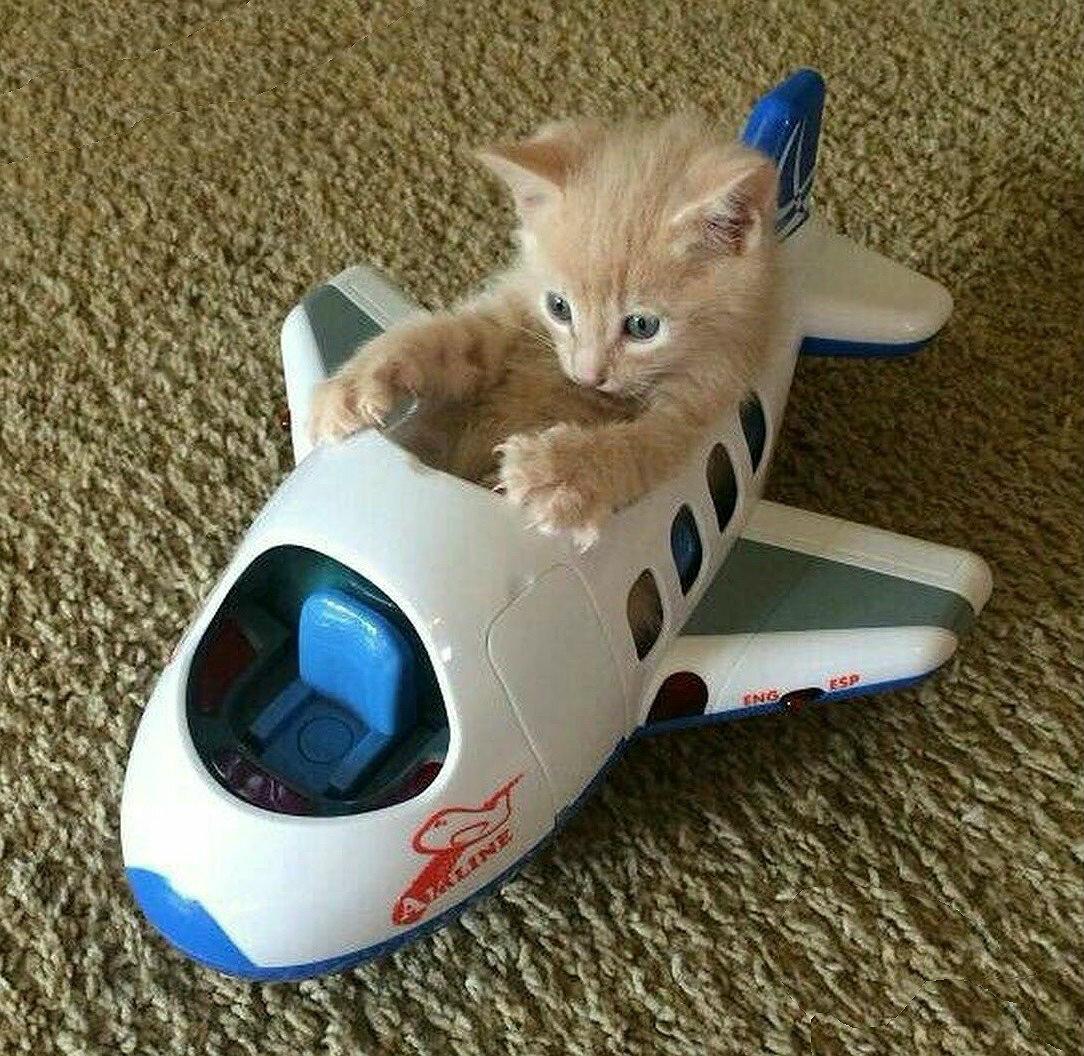 Кот в самолете прикол картинки