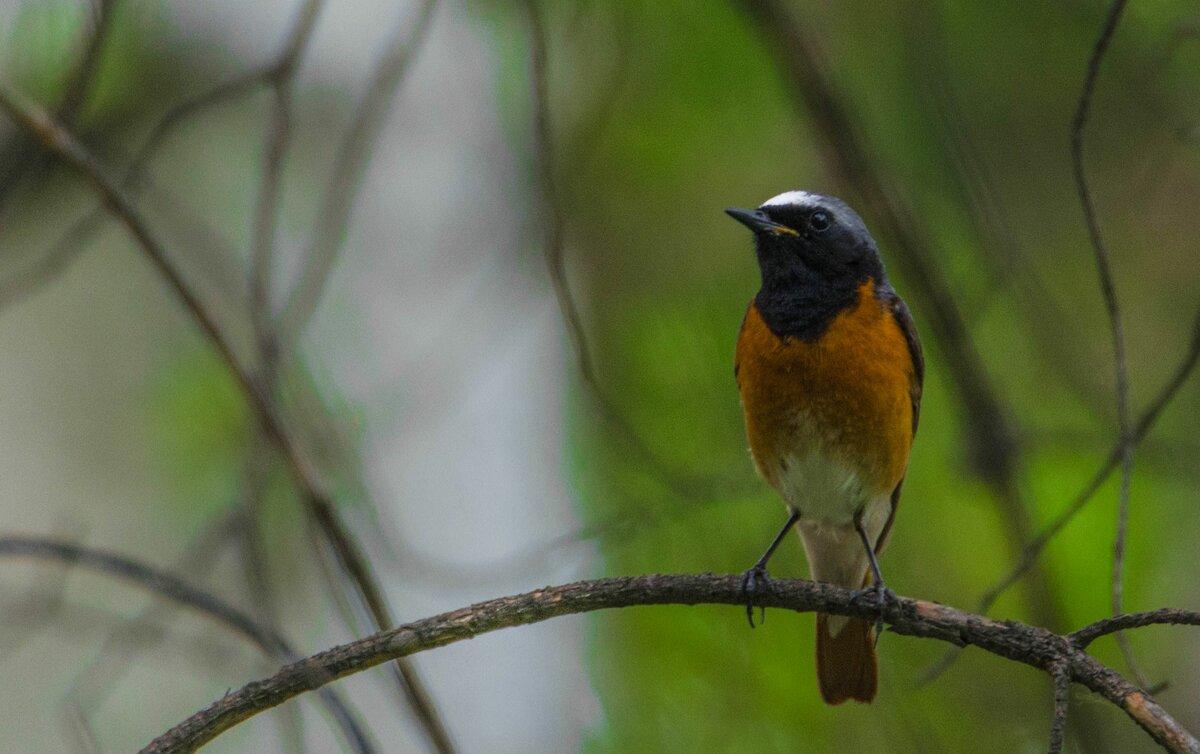 картинки птиц нашего леса коллаж