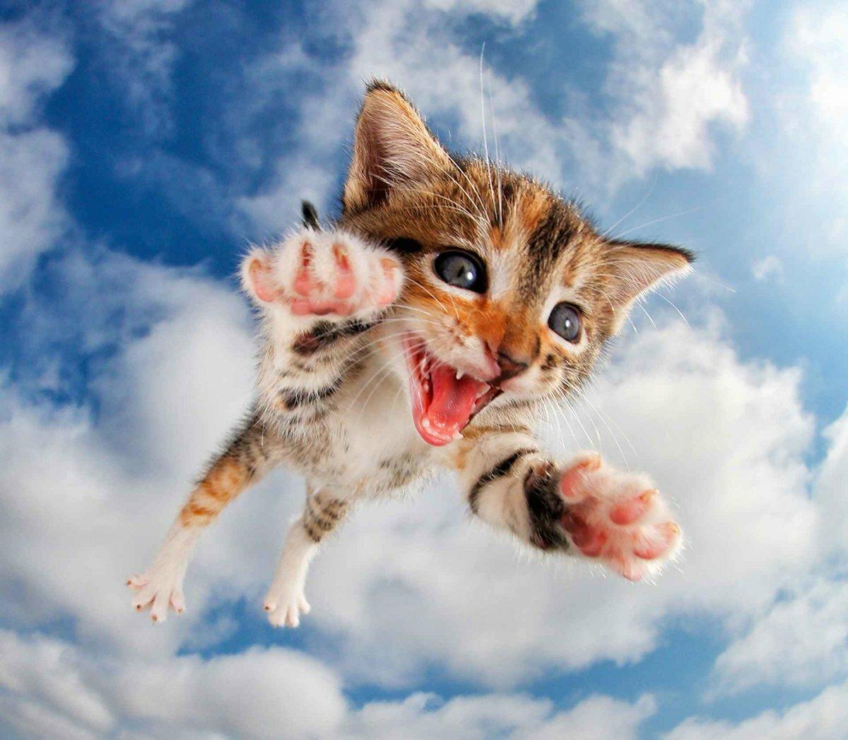 Смешной, картинки кошка с котенком прикольные