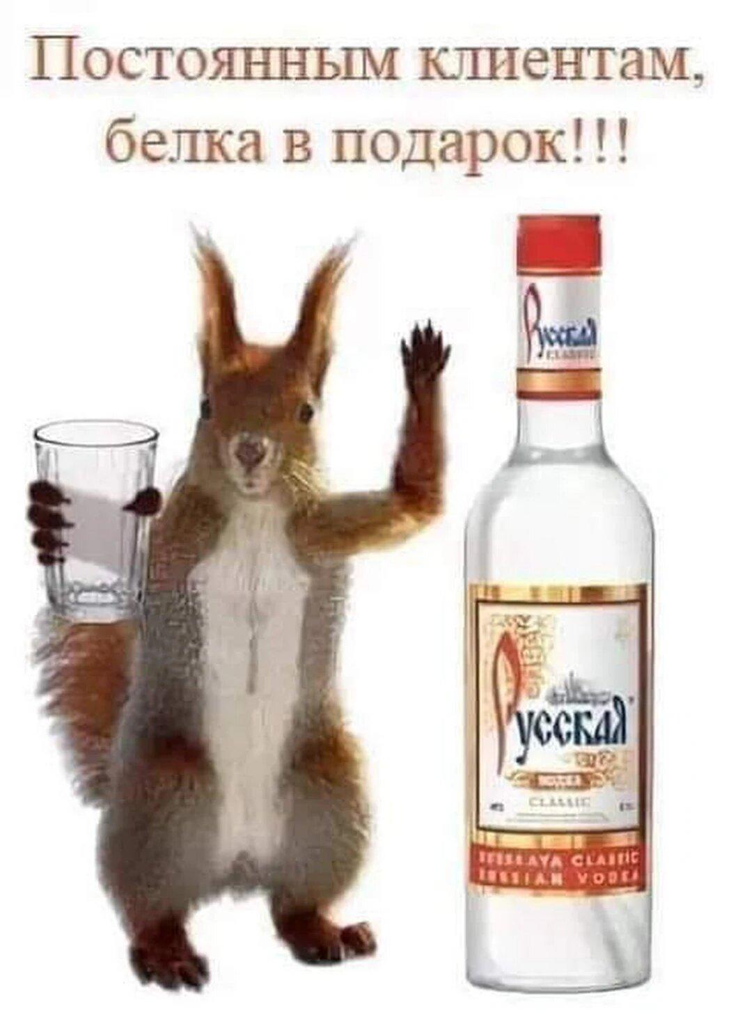 Белочка пьянка приколы картинки