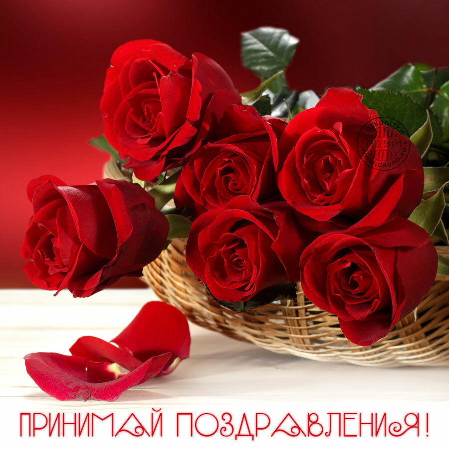 пожелания на розе напористый
