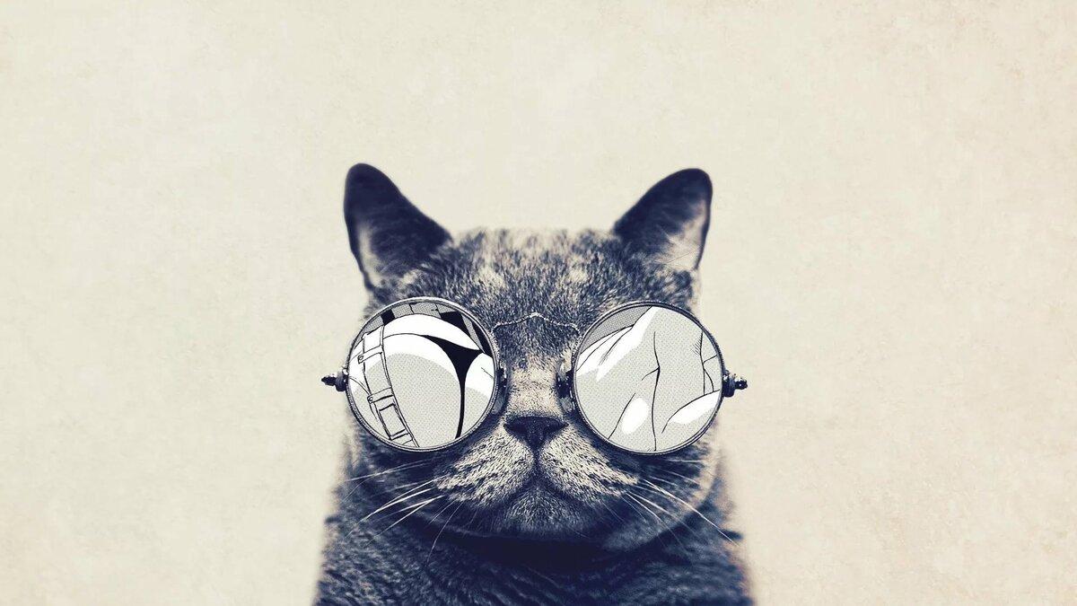 Днем, смешные коты обои на айфон