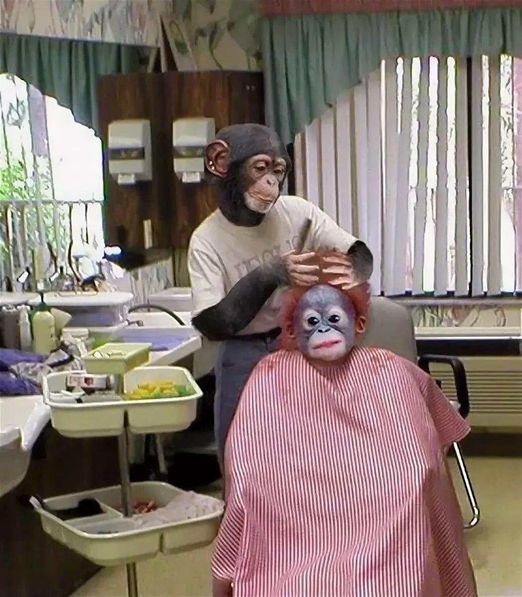 Смешные картинки парикмахера, открытки днем