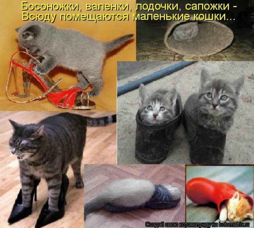 Картинки с надписями самые смешные с кошками