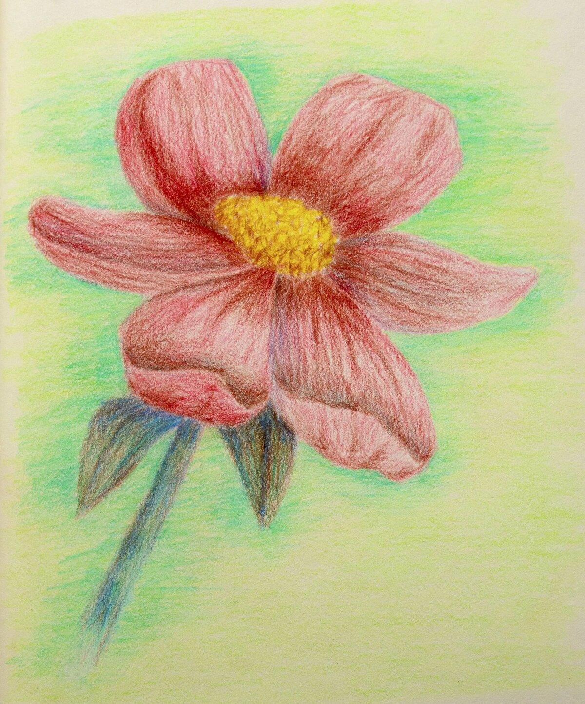 рисунки цветными карандашами фото пошагово своими фотографиями сети
