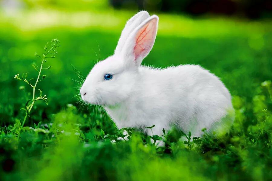 Кролик в картинках