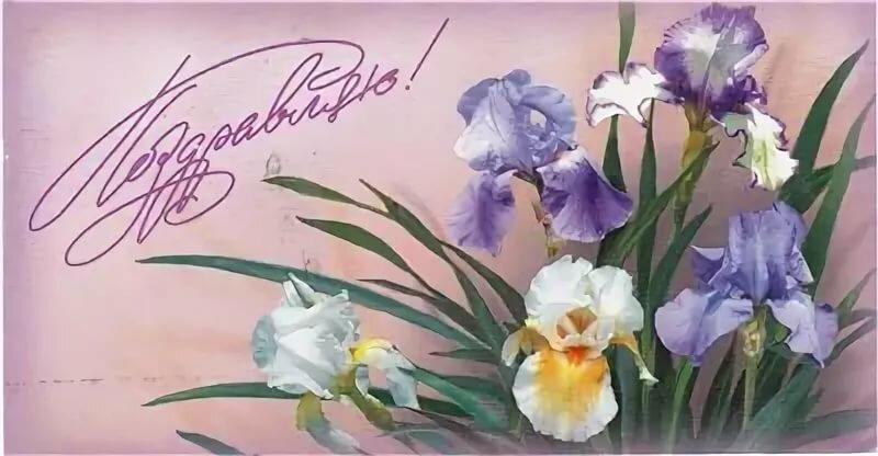 Открытка днем, открытка с цветами ирис