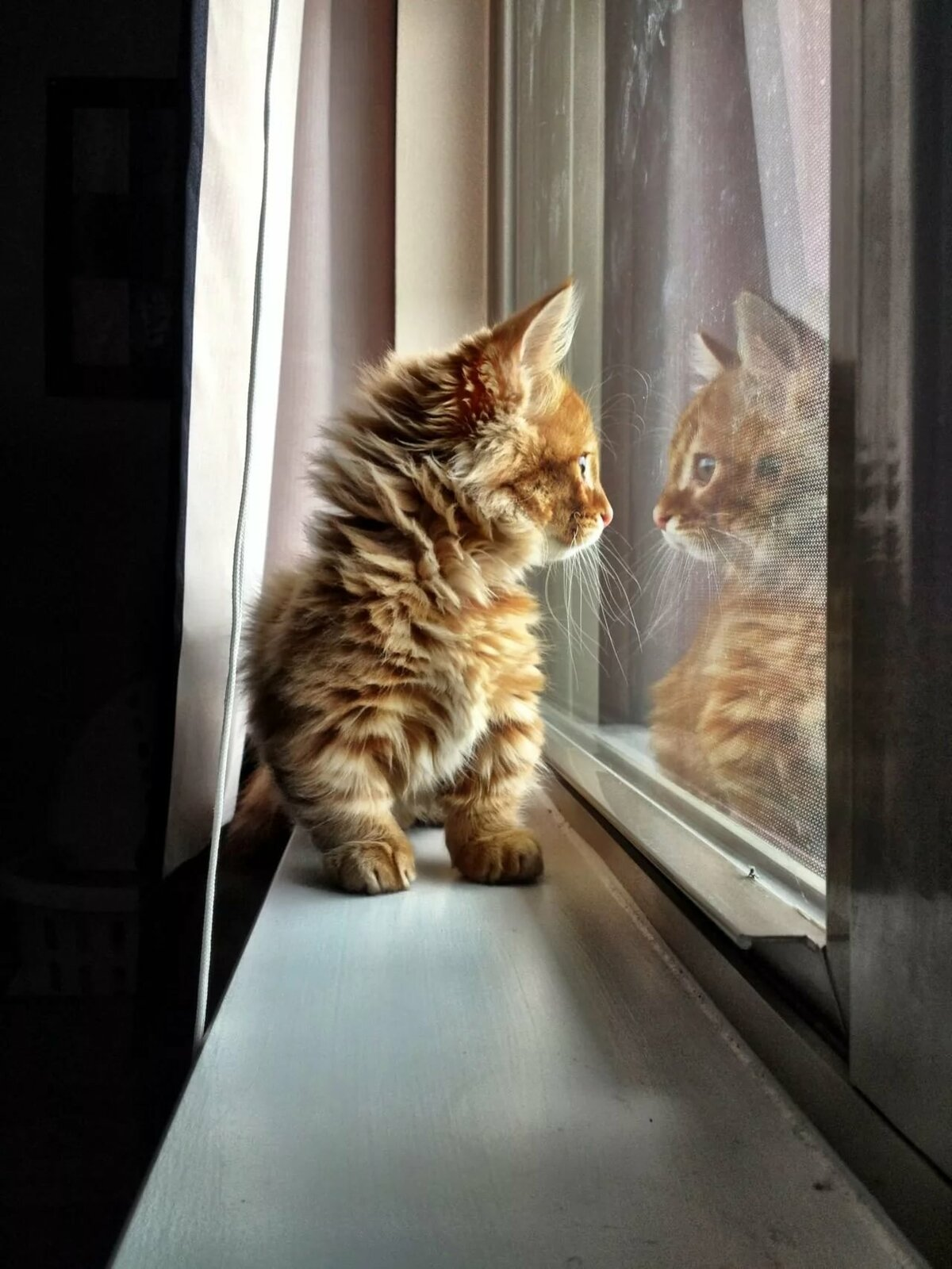 объявления продаже картинки кошка ждет хочется сделать прическу
