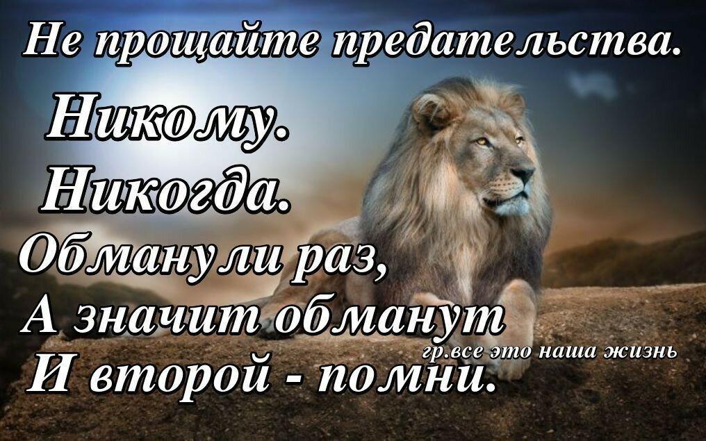 продаже если львы обижаются то чел нравится открытка свой новый трюк