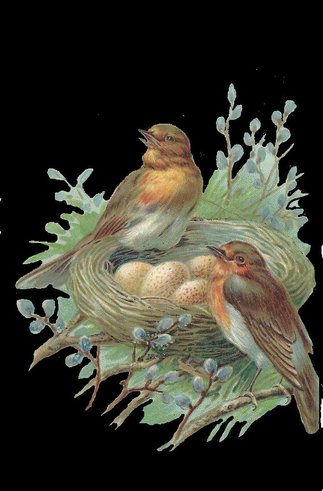 Картинка, птицы с открыток