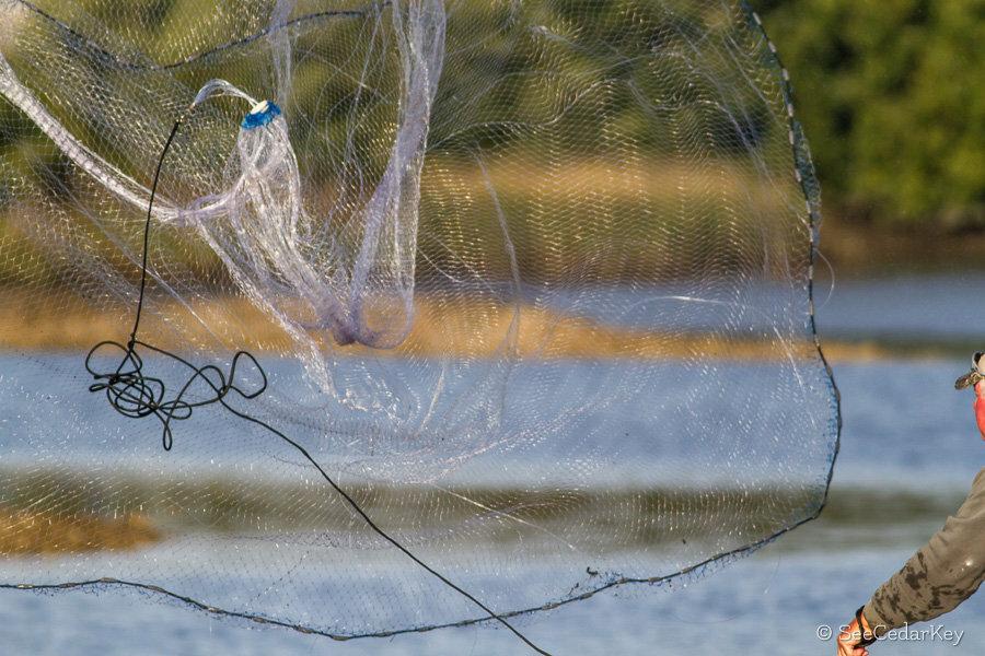 Супер ловушка Findfish в Находке