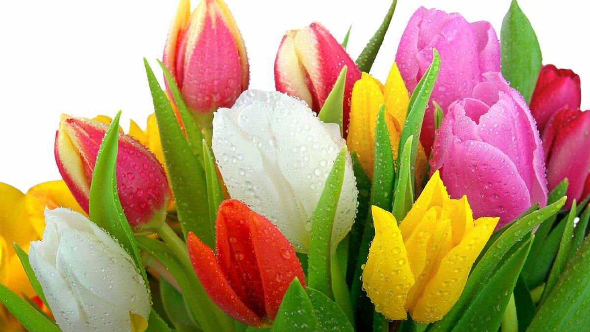 Фотографии цветов на открытку