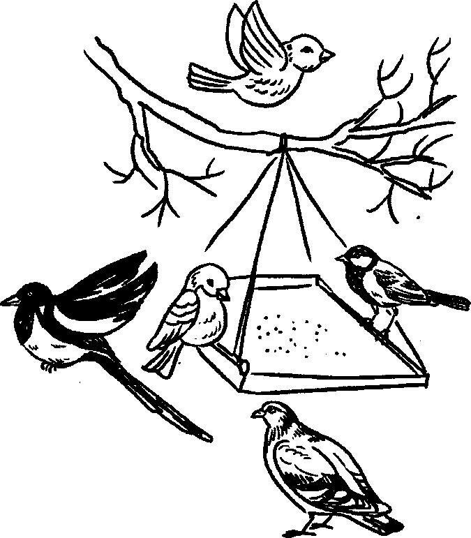 раскраска кормушка для птиц распечатать гранин выдающийся