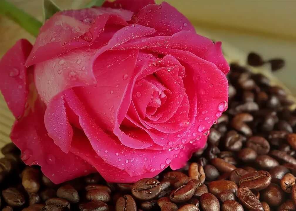 Доброе утро открытки розы