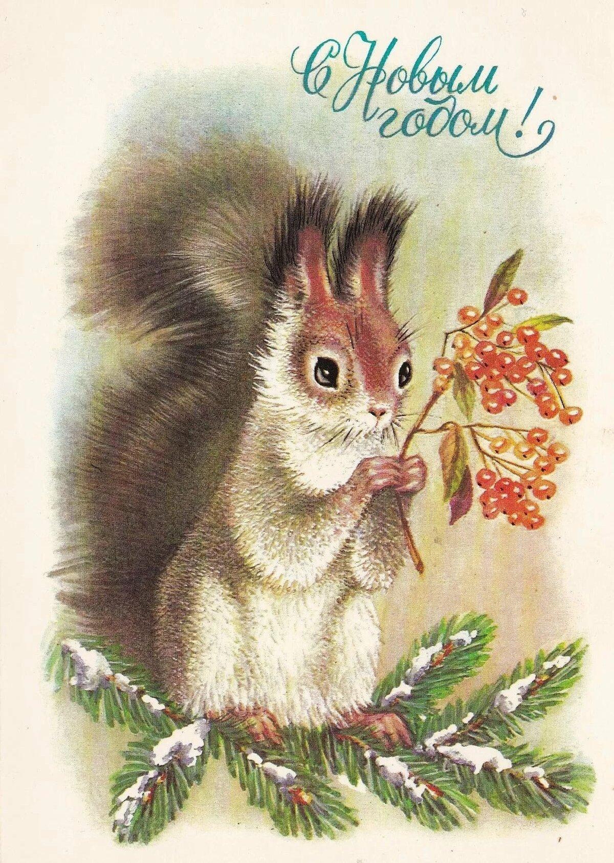 Белочка с открытки, открытки февраля