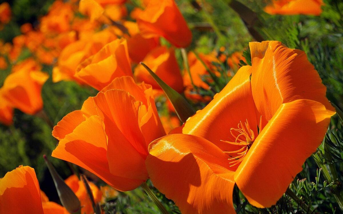 оказалось, бойфренд сад оранжевый картинки на рабочий стол эсмеральды