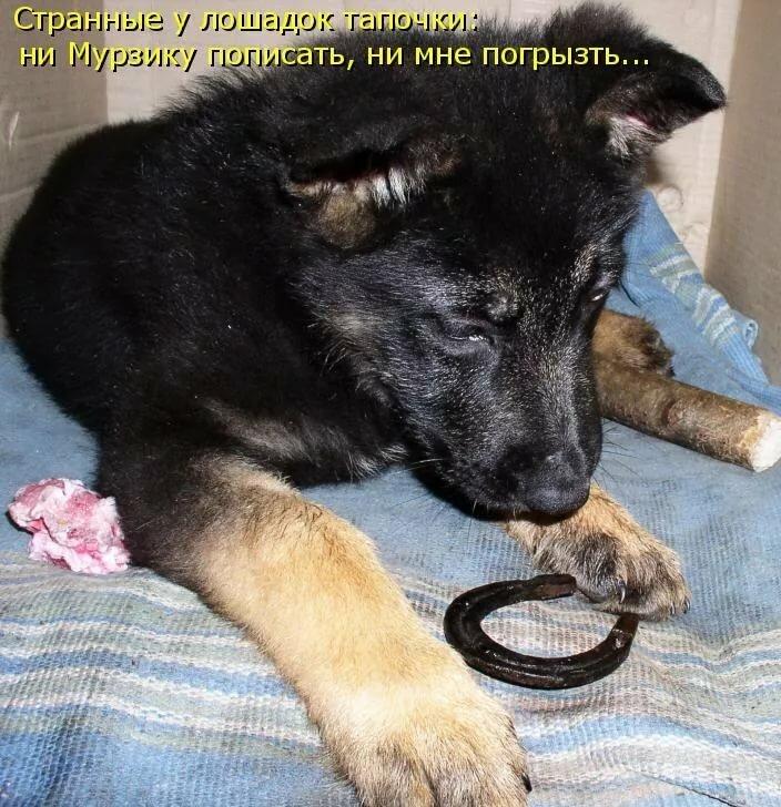 Смешные картинки с животными с надписями, днем рождения