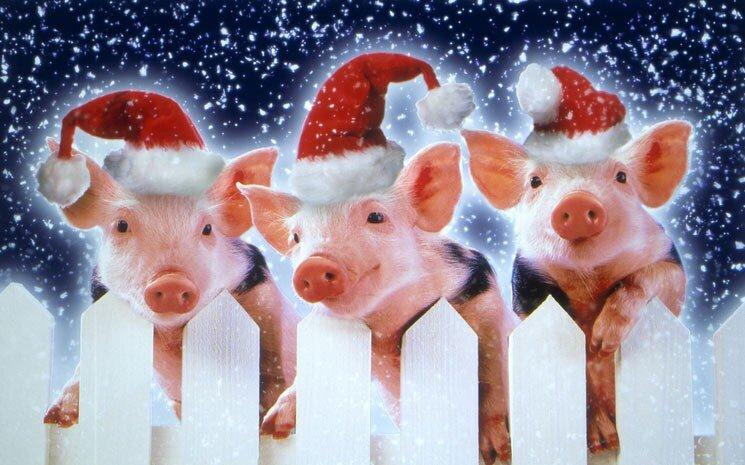 Отправить сообщением, прикольные картинки со свинкой на новый год