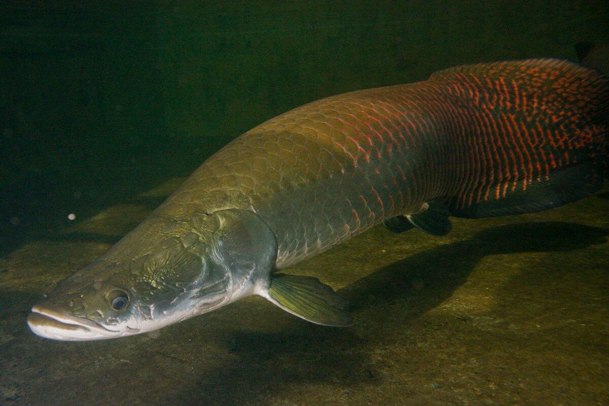 Фото рыбы свисающей через стол