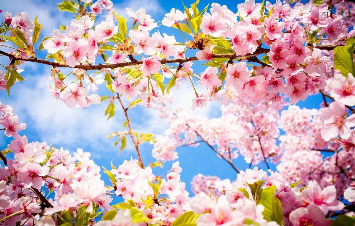 Картинка на рабочий стол весенние цветы