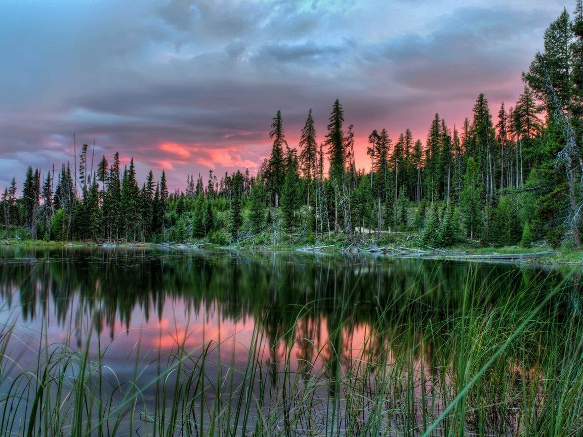 был канада леса фото карелии