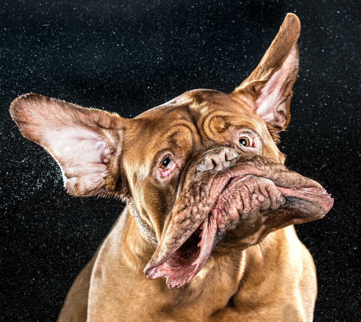 Смешные картинки с сабаками