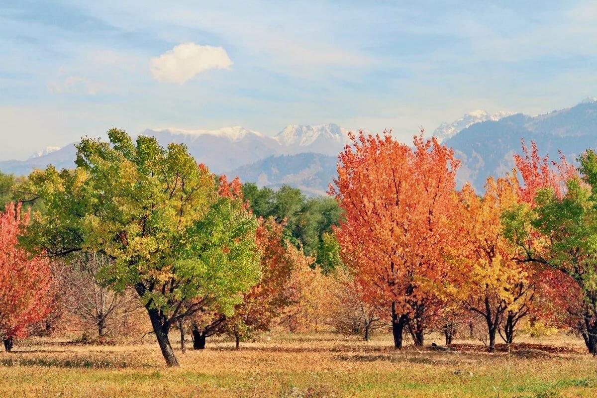 если осенние пейзажи казахстана фото она проснулась