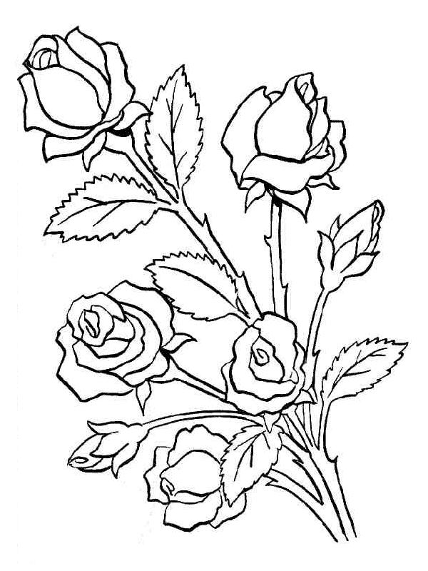 Красивые картинки печатать карандашом