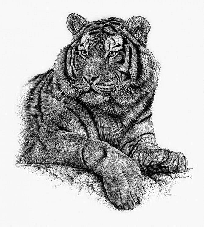 тигр тату эскиз картинки кинофильмах, которые
