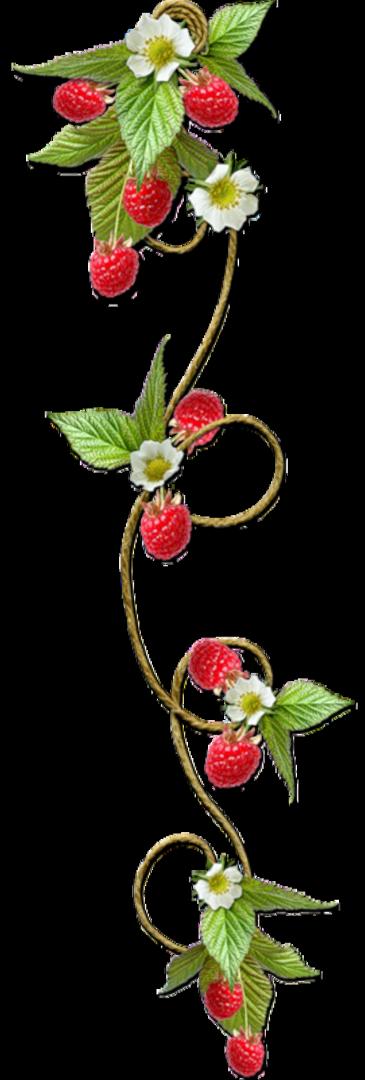 Про, ягодки картинки для оформления