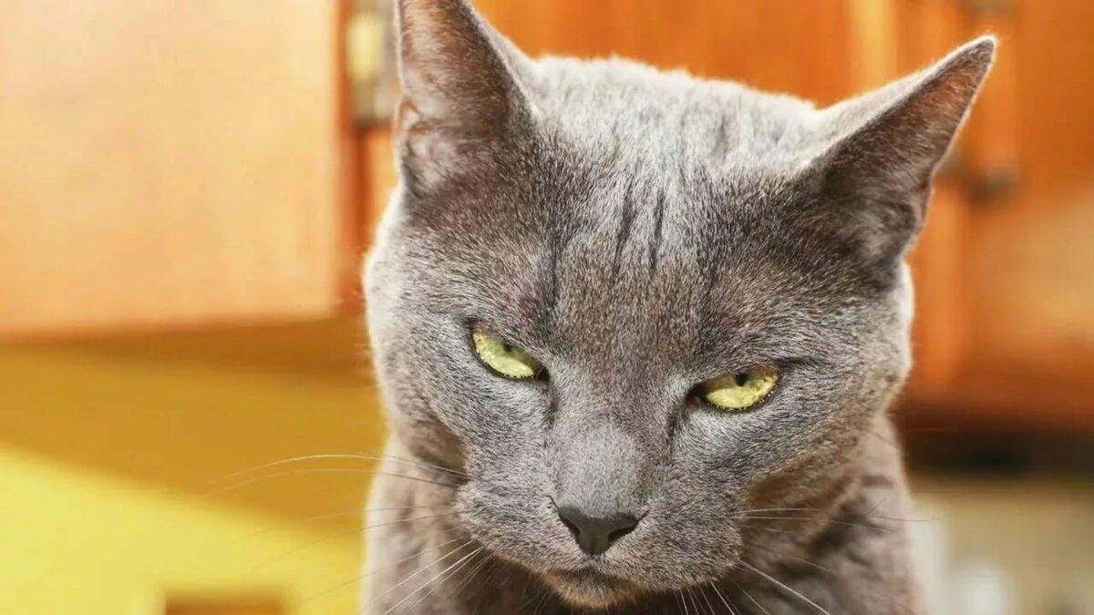 Смешные картинки и фото котов, днем