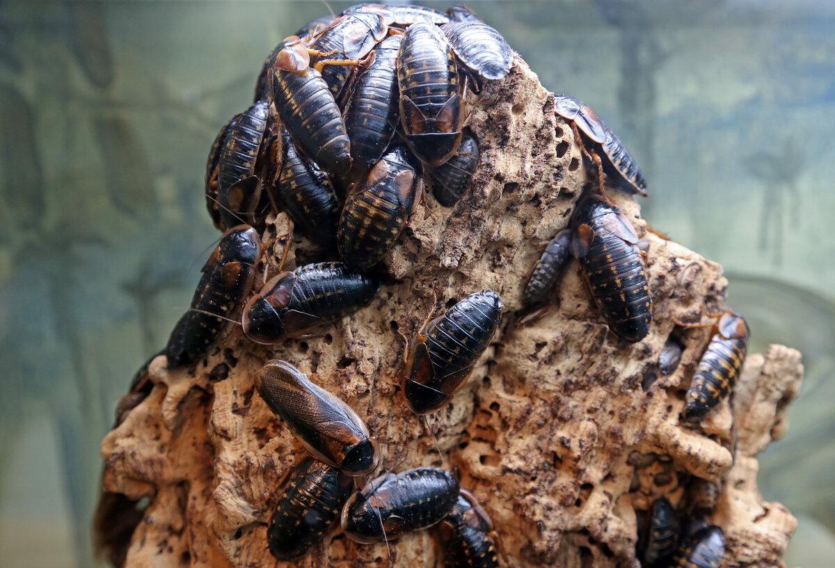 картинки террариум с насекомыми пугачева