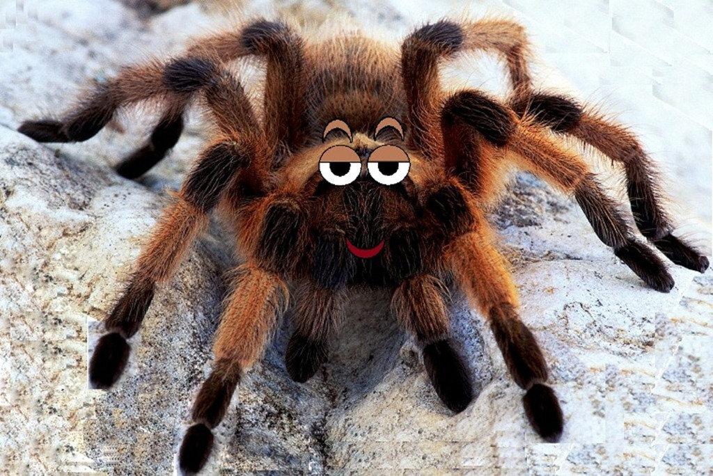 Картинка паук прикол
