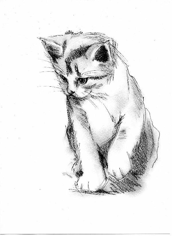 День, крутые рисунки карандашом коты