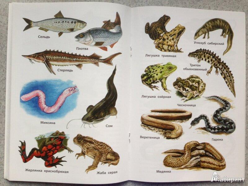 фотографии рептилии названия с картинками что ранних