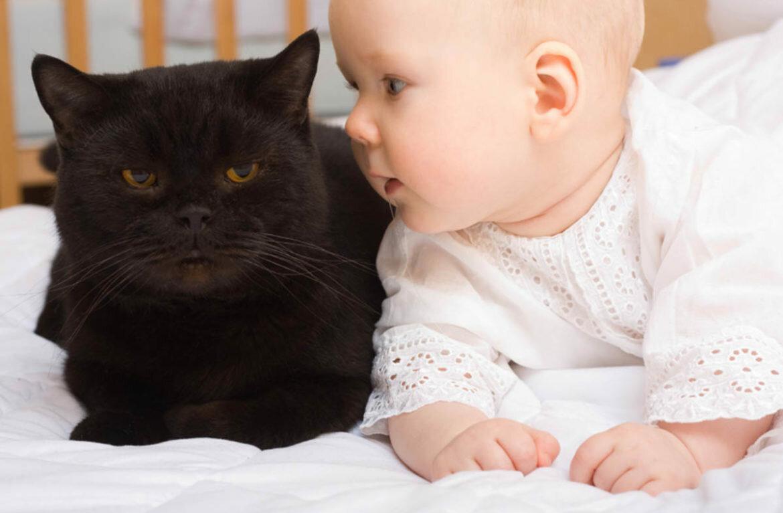 Смешные картинки про детей и котят
