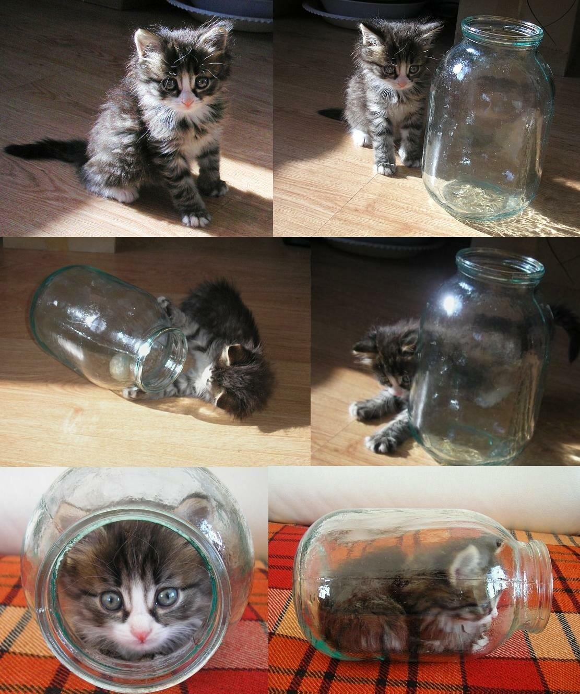 Раскраски, картинке смешные кошки и котята и коты до слез