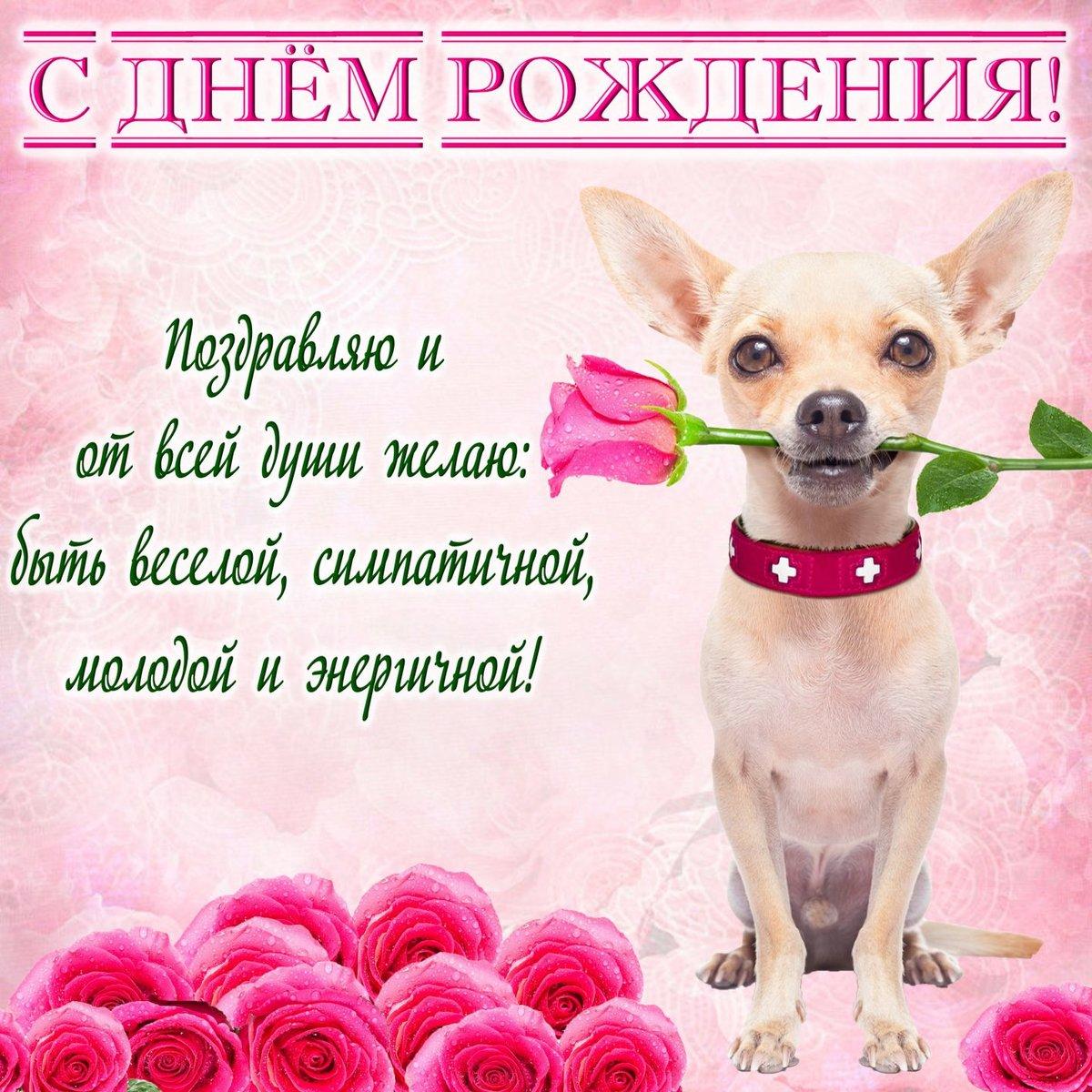 Открытки для поздравления собаки, дня православные