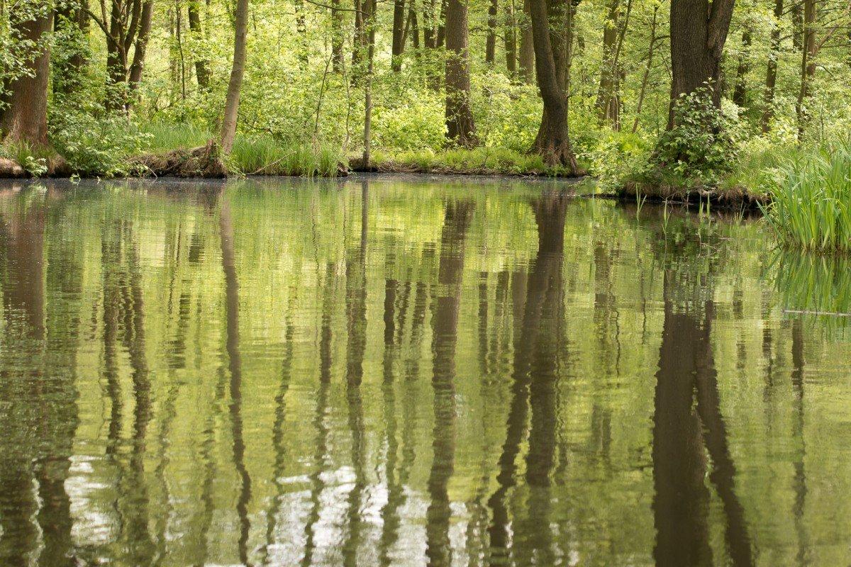 красивые картинки болото в лесу