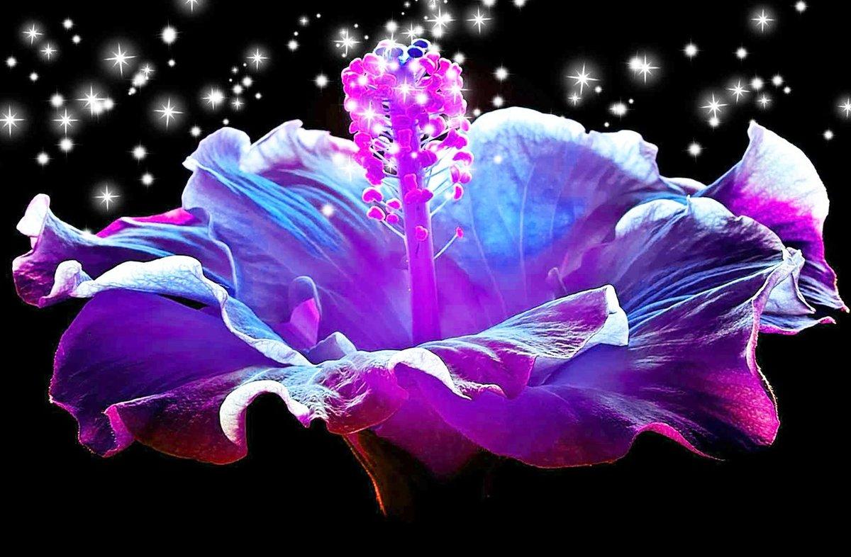 самый волшебный цветок картинки интересующимся девушкам
