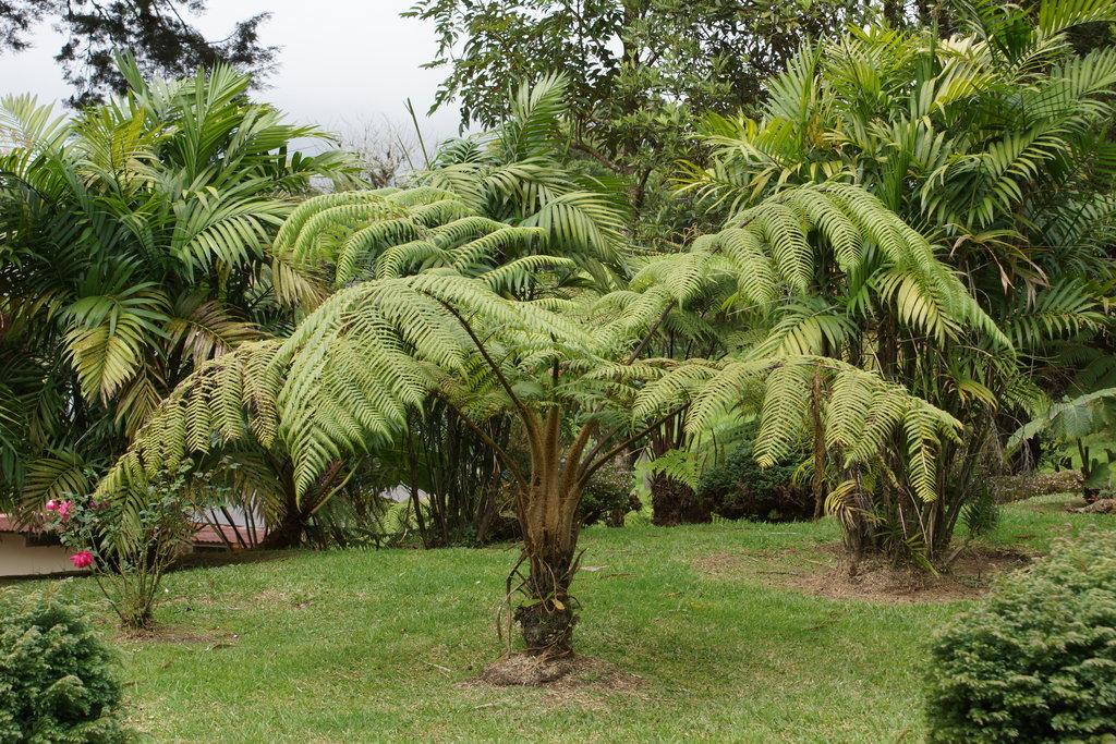 хотелось, фотографии папоротников пальм сокращение поголовья