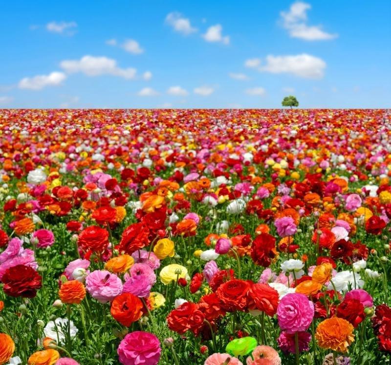 Рождению, картинки природа поле цветов