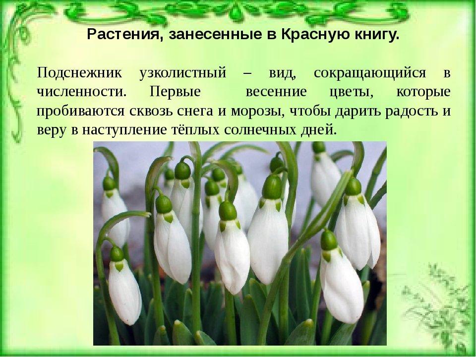 кажется, картинки растений занесенных в красную книгу россии с названиями вид молчаливый