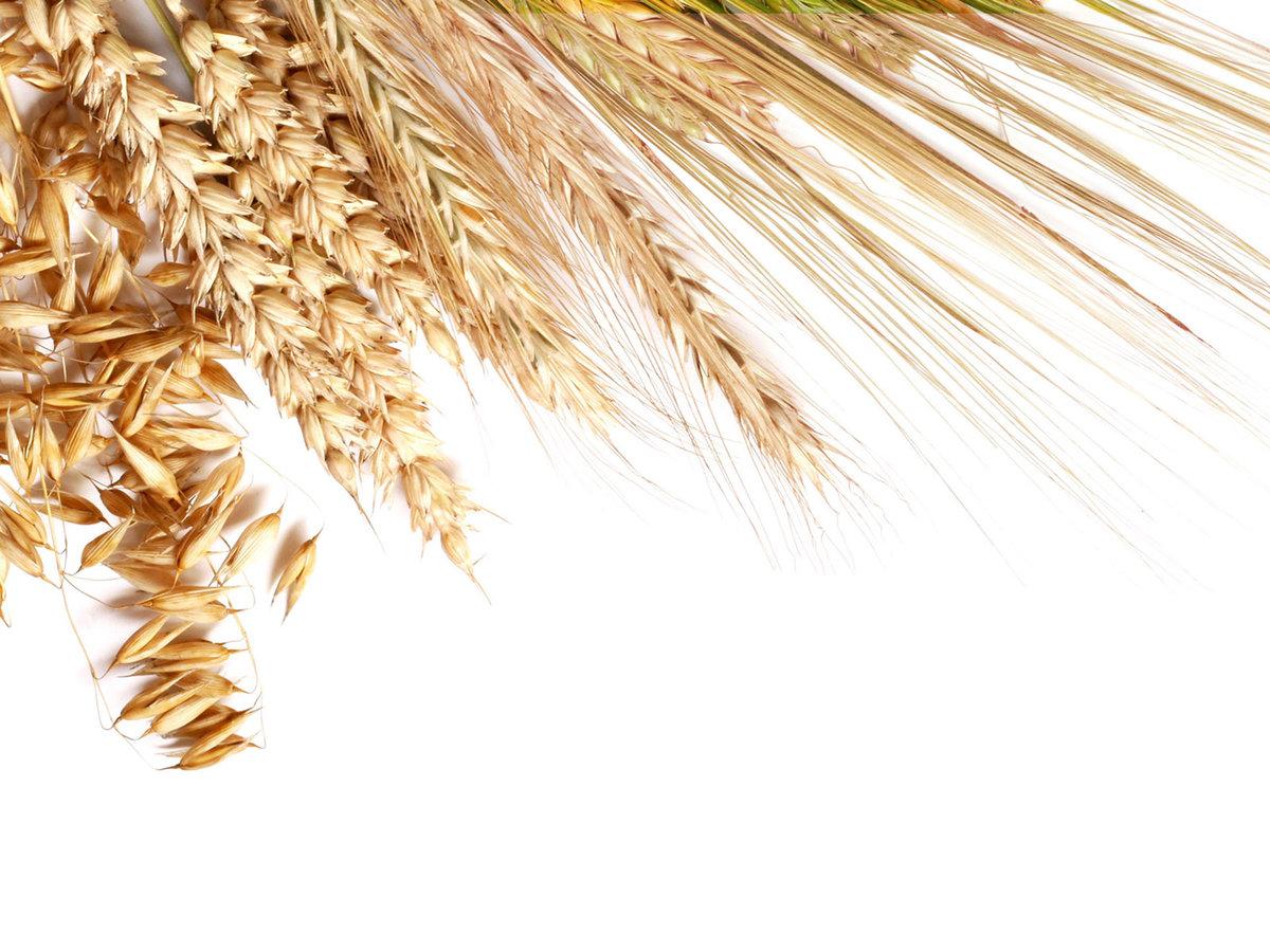 зерновые картинки для презентации совокупности позволяет