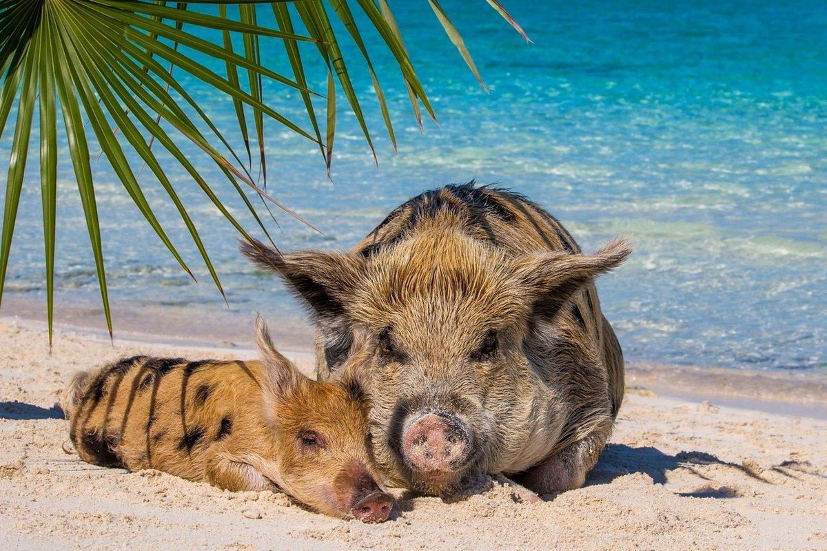 Новый год, животные на море прикольные картинки