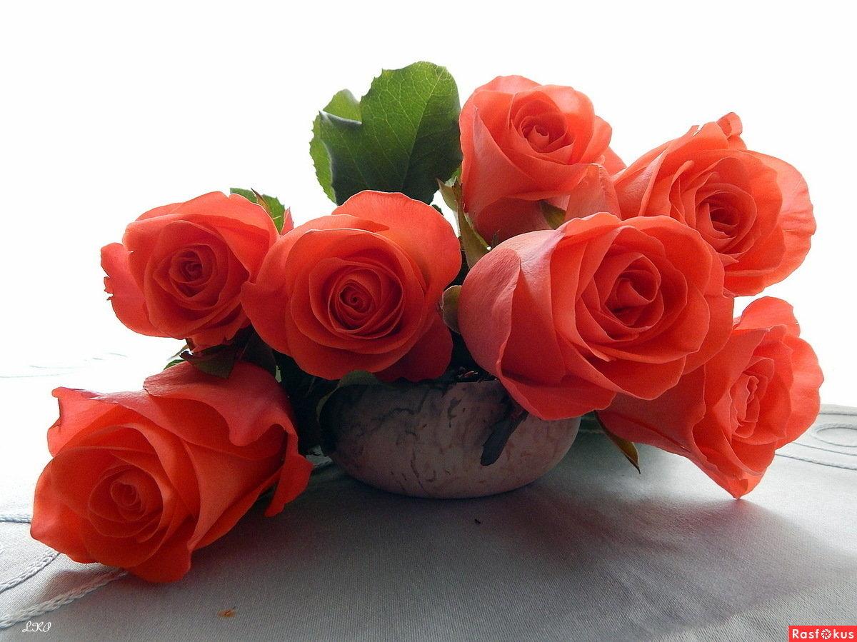 Роза для любимой открытка, годовщиной свадьбы лет