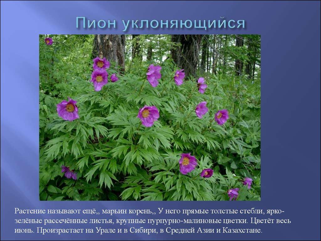 Красная книга россии растения и картинки