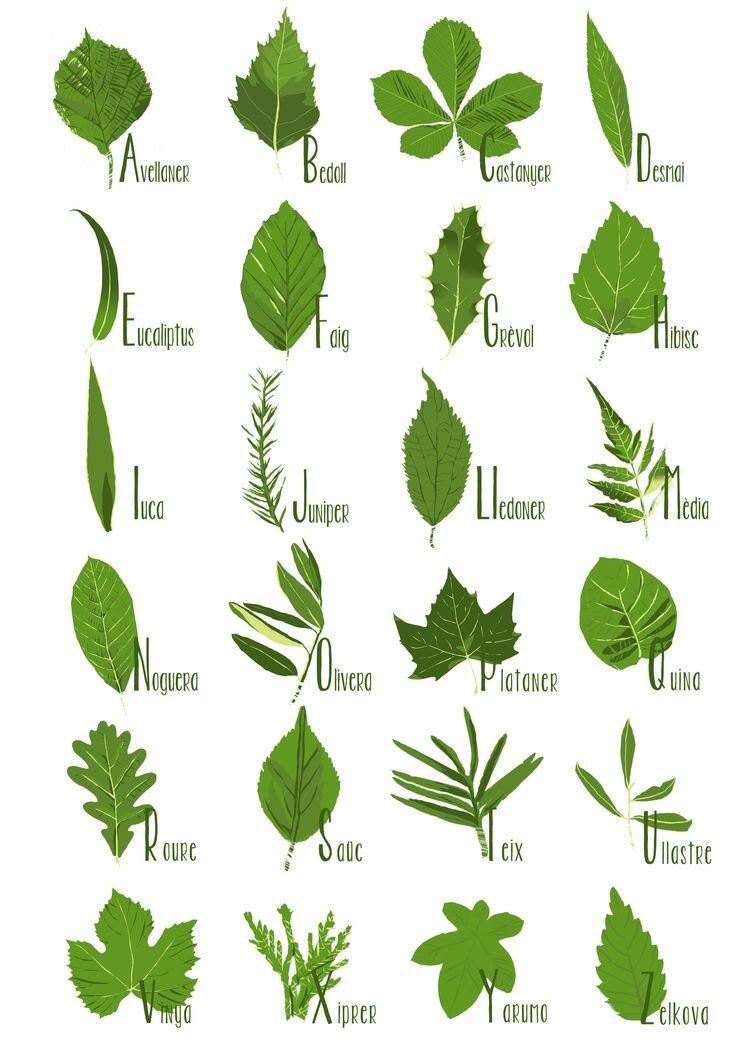 Листья деревьев и название картинки